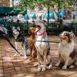 DC 2018 Animal Health Fair (FREE Vaccinations!)